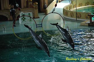Photo: Atraksi lumba-lumba