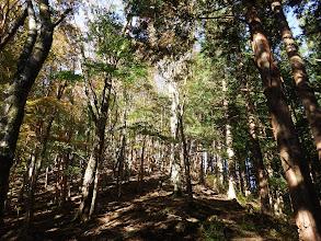 自然林が多く