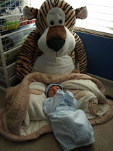 Photo: Eva couldn't resist getting this tiger for Clark. Now it will be fun to take pictures of Clark with it as he grows up.