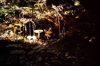 Photo: More mushrooms.