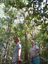 Photo: Boxwood - Buxus bahamensis, Family: BUXACEAE. Cayman Islands, Bahamas, Cuba and Jamaica. Satu Troyer and Lois Blumenthal. Photo: Ann Stafford, QE II Botanic Park, Grand Cayman, Feb. 16, 2003
