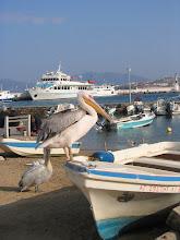 Photo: Mykonos: Kuuluisat linnut rannalla. Taustalla olevalla laivalla menimme Delokselle.