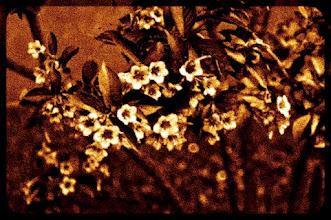 Photo: tapis dès fleurs