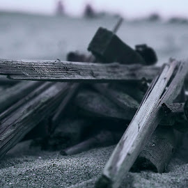 Wood on the beach by Magdalena Sitko - Artistic Objects Still Life ( shore, beaches, unique, wood, pale, focus, beach, washedup )