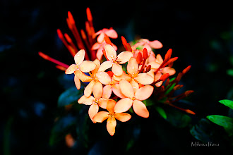 Photo: ...a moment of beauty...  I would like to share with you, in this again cloudy Friday morning, one moment of beauty the way I saw it and captured it....Happy Friday, Everyone!  Contribution to #floralfriday  +FloralFriday by +Tamara Pruessner; #breakfastclub  +Breakfast Club by +Gemma Costa; #feelgoodfriday +FeelGoodFriday by +Rebecca Borg and +Jason Borg; #fourseasonsfriday +Four Seasons Friday by +Stephonie Schmitz; #colorsonfriday +ColorsOnFriday by +Karsten Meyer and +Britta Rogge; #canonusers   #canon #canonphotographers   #canonphotography , +Canon Users; #promotephotography +Promote Photography; #photography #PlusPhotoExtract  #HQSPMonochrome by +Blake Harrold and +Luis Vivanco; #flowers   #flower #floral  #10000photographers +10000 PHOTOGRAPHERS  by +Robert SKREINER;  View larger image and more works from Yellow/Orange Floral Gallery: http://smu.gs/ZR32CS