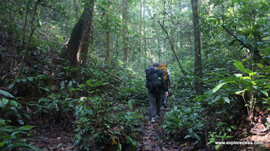 Photo: Tropical Rainforest