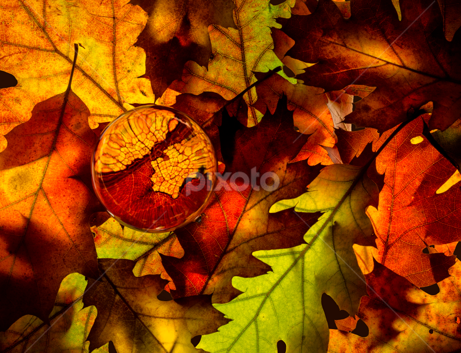 the structure of leaves by Marianna Armata - Nature Up Close Leaves & Grasses ( structure, canada, green, caleidoscope, back-lit, leaf, marianna armata, leaves, maple, fall leaves on ground, macro, pwcfallleaves, red, tree, nature, multi-colored, color, autumn, foliage, oak, fall, branch, brown )