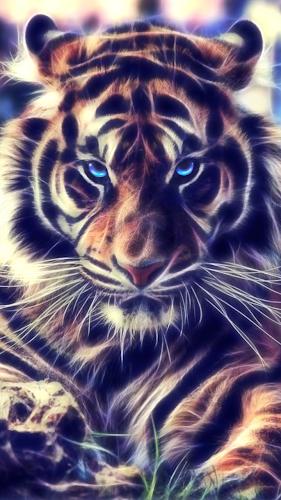 Screenshot Tiger Live Wallpaper Android App