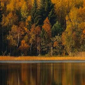 Autumn  by Alf Winnaess - Uncategorized All Uncategorized