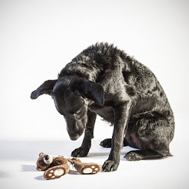 It's broken by Håkan Bergknut - Animals - Dogs Portraits