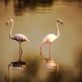 Face off by Ramakrishnan Sundaresan - Animals Birds