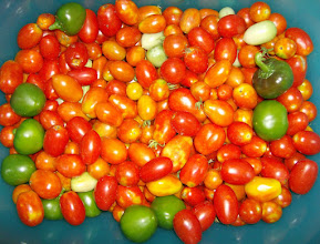 Photo: 25 lbs of tomatoes and peppers! 6/18/10