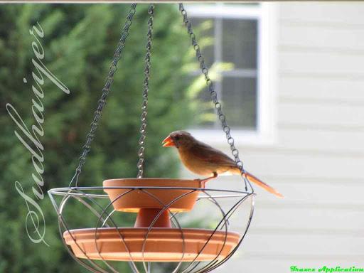 DIY Bird Feeder Design Ideas