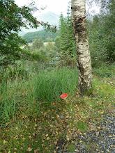 Photo: 13.09.2013 Autour de Ardgour. Début de la randonnée à Onich par des sentiers forestiers vers Inchree