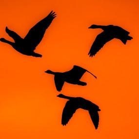 by Cerey Runyon - Animals Birds