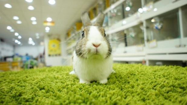 「愛兔假期」的圖片搜尋結果