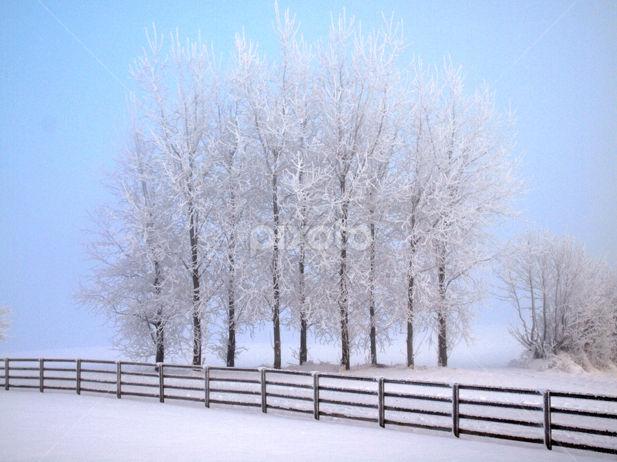 Winter trees by Ludwig Wagner - Landscapes Weather ( pwcwinter, fence, winter, ice, snow, path, trees, road, lane )