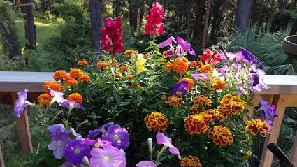 Kwiaty Na Zacieniony Balkon Twojogrodek Pl