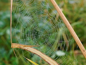 Photo: What a tangled web we weave