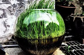 Image result for plants that grow in water