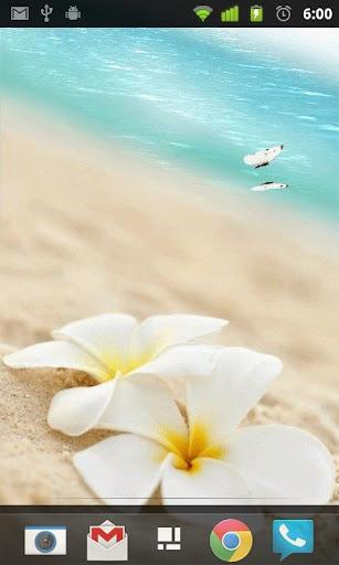 Beach Butterfly Live Wallpaper