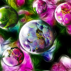 hyrdrangea bubbles.jpg