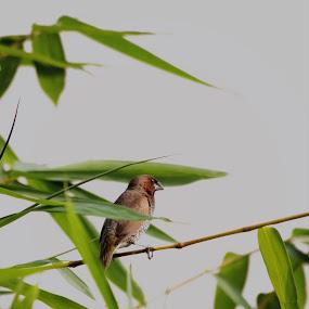 weiting by Prosenjit Biswas - Animals Birds