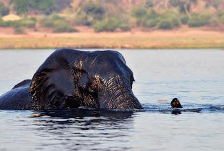 Photo: Chobe River, Botswana