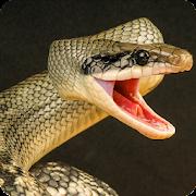 Anaconda Rampage: Giant Snake Attack