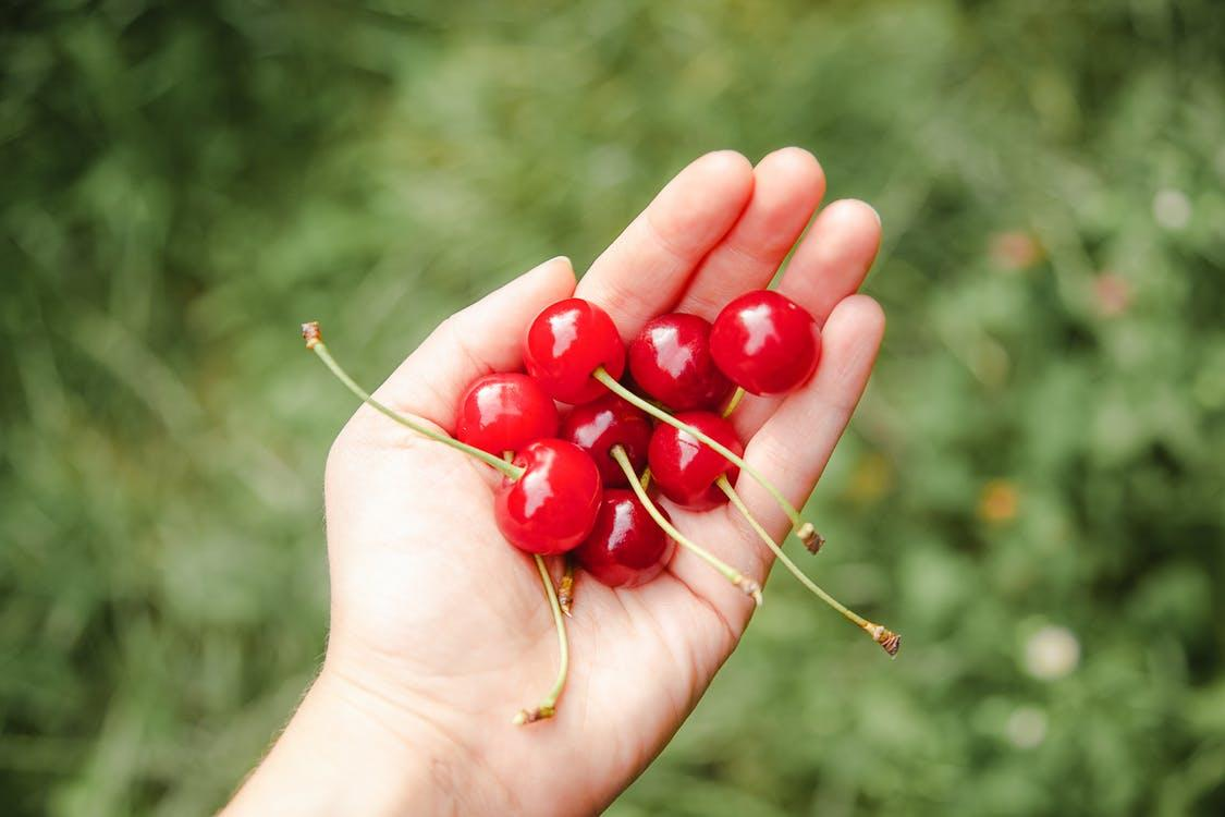 Crop unrecognizable male horticulturist showing heap of bright ripe cherries on farmland on blurred background