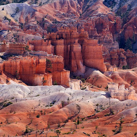 Bryce Canyon by Chris Seaton - Landscapes Deserts ( utah, bryce canyon, hoodoos, red rock, landscape )