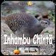Canto de Inhambu Chinta for PC-Windows 7,8,10 and Mac