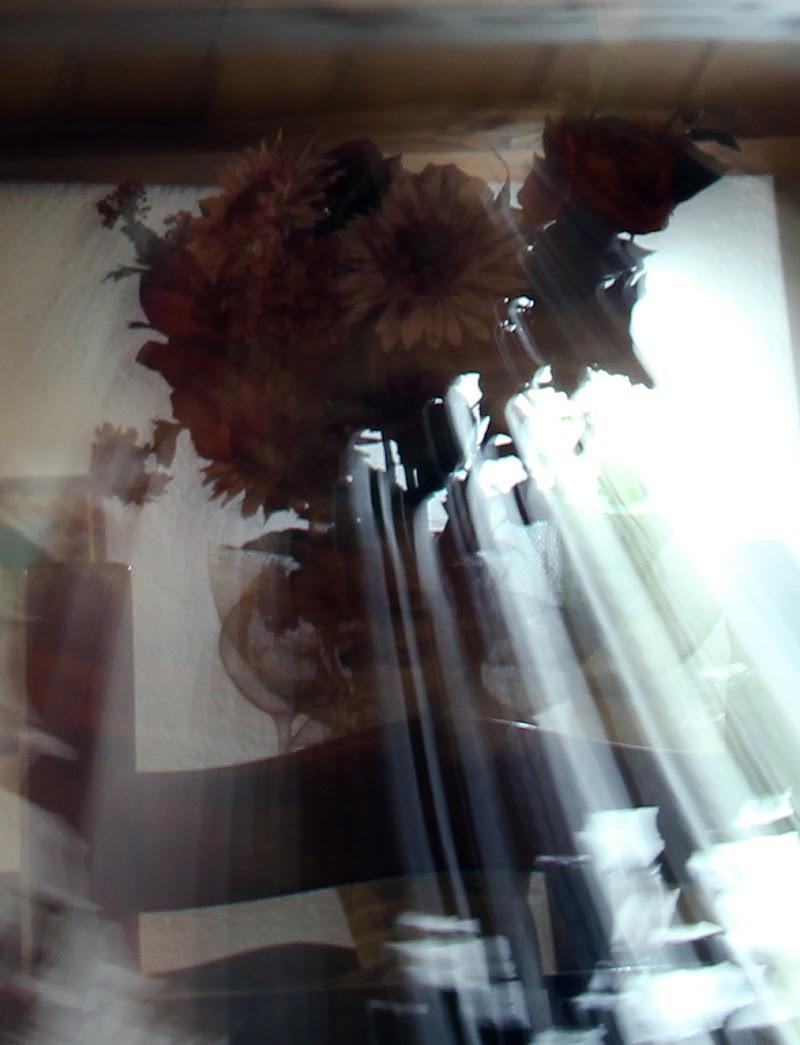 Il vaso di fiori di dianacaste