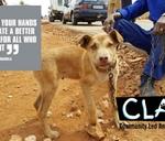 Mandela Day at CLAW : Claw - Community Led Animal Welfare