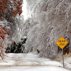 Frozen Wonderland by Stephanie Ostrander Bishop - Artistic Objects Other Objects ( ice, snow, nikon, landscape, frozen, pwcroadsigns )