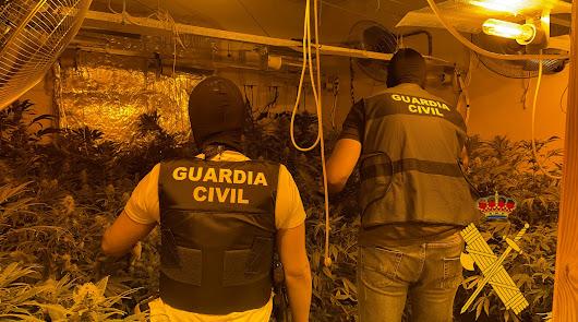 Dos detenidos con más de 400 plantas de marihuana en dos viviendas colindantes