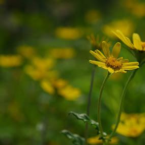by Rahul Kini - Nature Up Close Flowers - 2011-2013