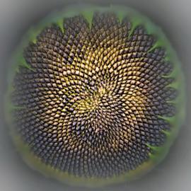 Sunflower Seeds by Teresa Wooles - Digital Art Things