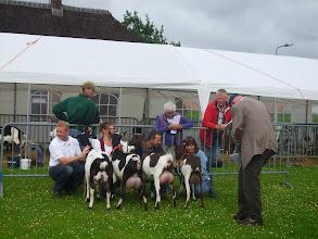 """Photo: Klasse 2: 1 jarige bonte geiten.   Lukky vd Oude Schuur; Bella's Theresa """"CH""""; Jenke'; Milka van Ingenveld."""