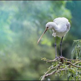 Bird by Jana Vondráčková - Uncategorized All Uncategorized