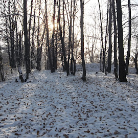 Зимен ден by Georgi Kolev - Landscapes Forests ( небе., сняг., слънце., сенки., гора., листа. )