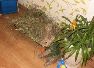 Photo: Wielkanocne gniazdko na prezenty wielkanocne (Wielkopolska)