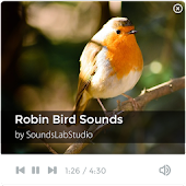 Robin Bird Sounds