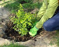 Obraz znaleziony dla: ogrodnik sadzenie roslin
