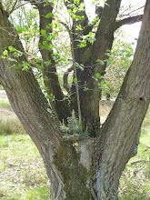 Photo: twee verschillende boompjes in een boom