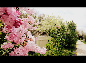 Photo: Cinemascope photo of lilacs by a white picket fence and path at Wegerzyn Gardens in Dayton, Ohio.