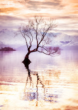 Photo: Happy Birthday Google+!  Yesterday after I went to go see my optometrist (maybe you saw the video I posted), I went down to the lake in Wanaka to enjoy the sunset. I was listening to music and watching this most unusual tree that just grows right out of the lake! It was very zen... listening to music and taking photos... a nice evening all together! :)  I'm also excited about the new Google+ features... finally, moving photos around albums... and other new stuff too! Now I have one less reason to log into the old Picasa site!