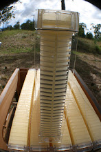Photo: Flow hive frame beekeeping review MahakoBees