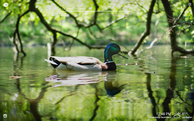 My Duck HD Wallpapers New Tab Theme