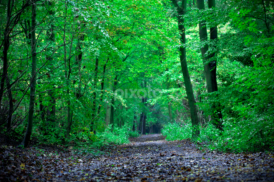 Green(ery) by Sorin Bogdan - Landscapes Forests ( uk, autumn, green, chenies, path, forest )